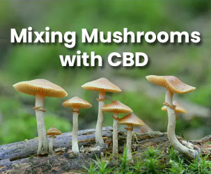 A Complete Guide of Mixing Mushrooms With CBD
